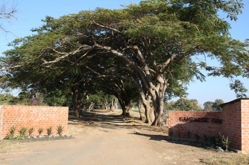 Kambwese farm.jpg