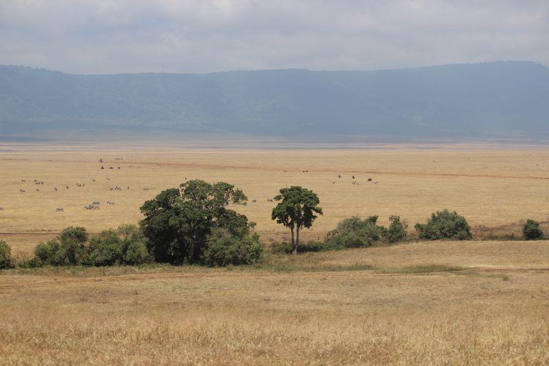 Ngoro plains 2.jpg