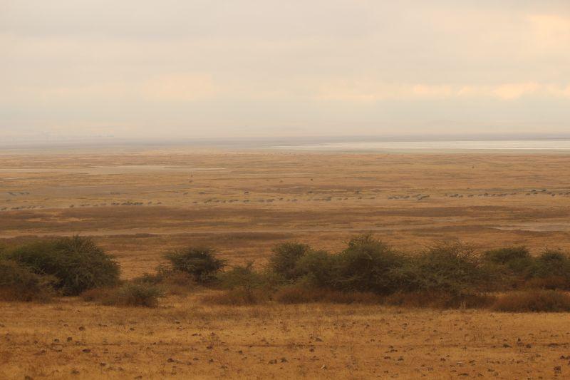 Ngoro plains.jpg