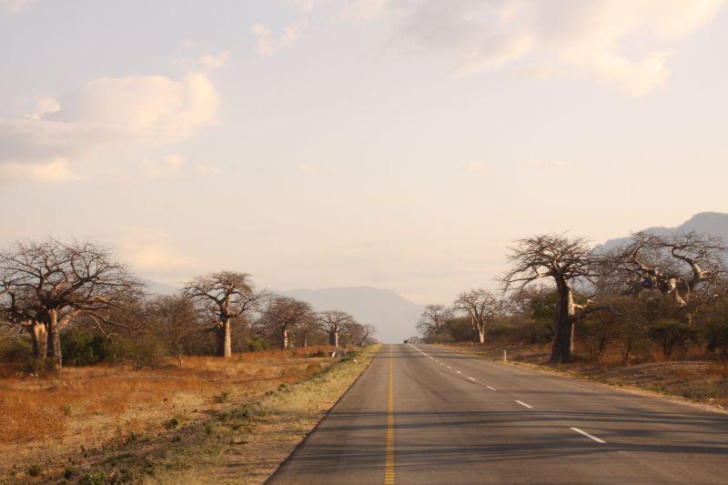 Baobab 5.jpg